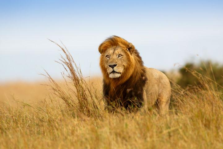 Afrika Safari Zamanı